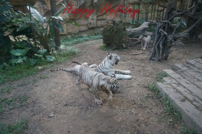 广州番禺长隆香江野生动物世界
