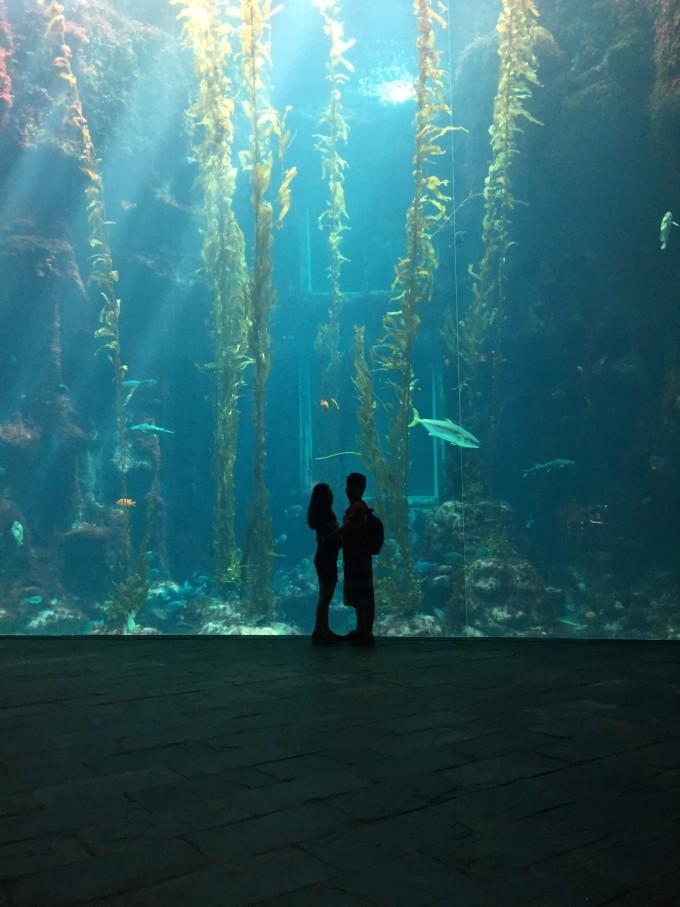 壁纸 海底 海底世界 海洋馆 水族馆 桌面 680_907 竖版 竖屏 手机