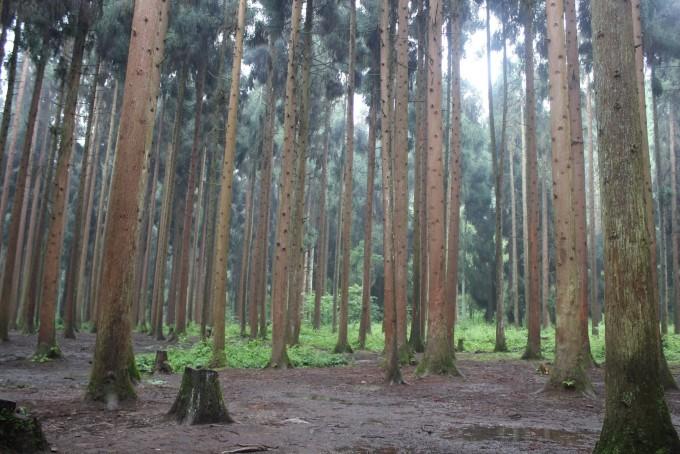 雨后森林场景动画设计