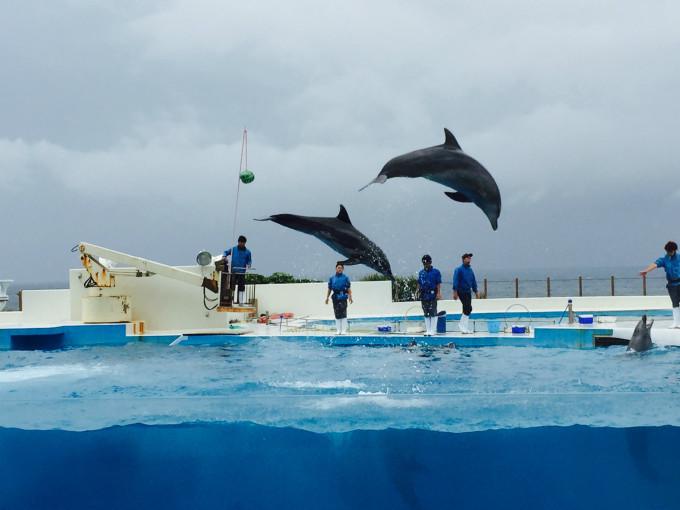 海豚简笔画 风景 简单