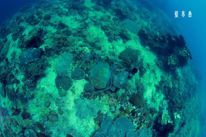 蓝毒之旅(二)——巴厘岛蓝梦岛水下惊魂