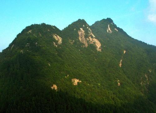 千山风景区的树种类