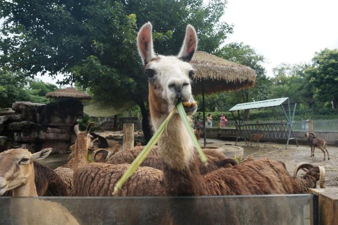 周末的治愈之旅,广州动物园