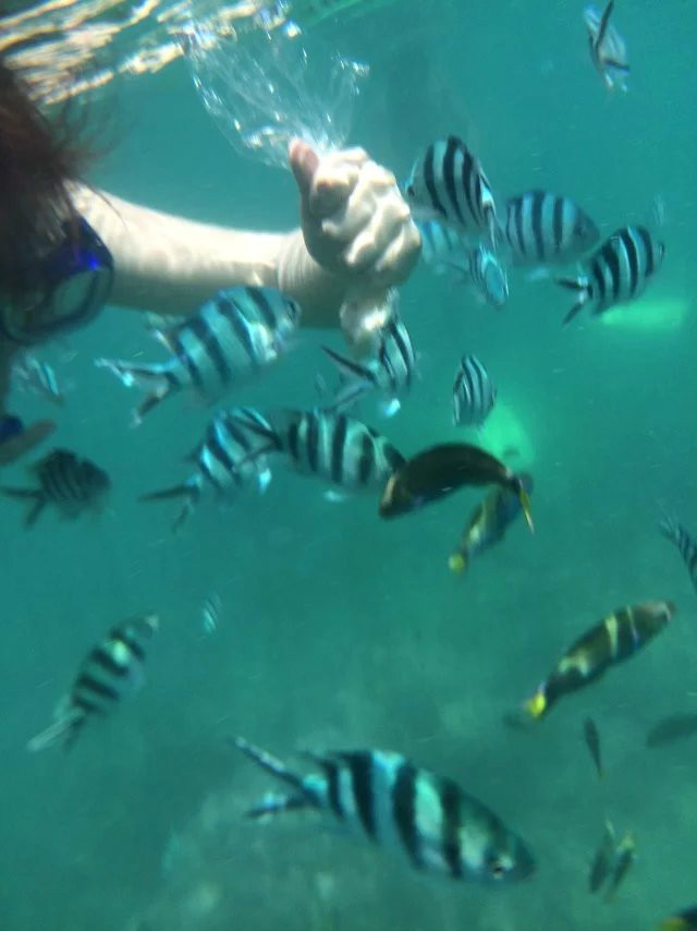的海已经好漂亮了,没想到卡帕莱真的是美得要了我命!去到那我只会说一句话:好靓好靓真系好靓!开启各种自拍模式 -->  下午就马上跑去浮潜了,海水超级的清切,别以为卡帕莱的水很浅,其实跳下去才发现是很深很深的!海底真的是一个奇妙的世界,各种小鱼大鱼在你身边游来游去。卡帕莱是个珊瑚礁,往海水深色的地方游去就像一个悬崖一样,第一次见的我觉得超级恐惧而又兴奋,真的太漂亮了!