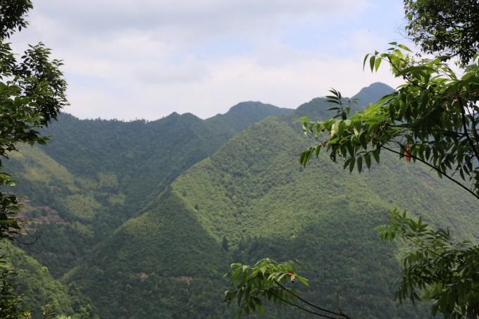 隐藏在浙南山区的原始森林——十里叠锦箬寮,松阳自助
